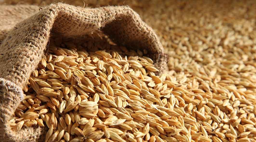 barley9477