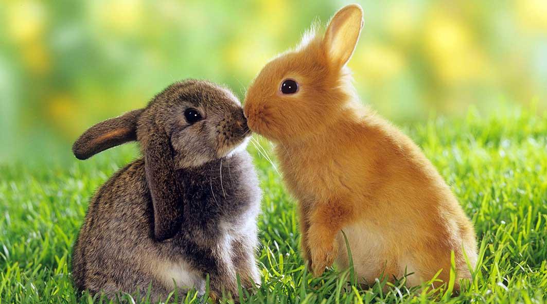 bunny.jpg94716