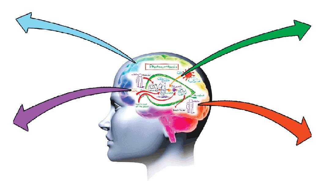 color-brain-master_arrows2.jpg94716
