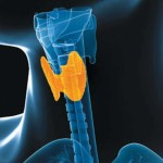 what you know about Common Thyroid Problems