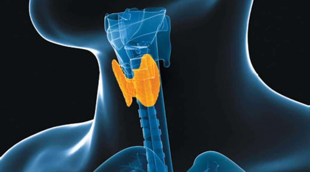 dive-doc-thyroid-problems-diving.jpg94713