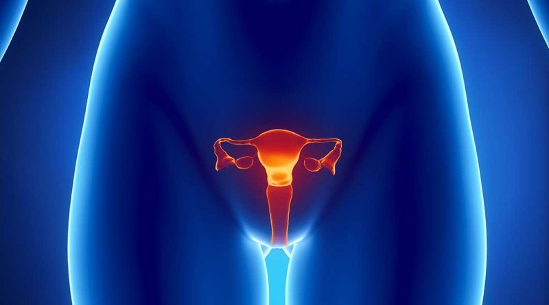 female-reproductive-graphic9479