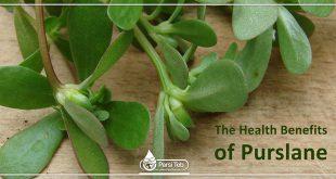 The Health Benefits of Purslane