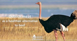 ostrich meat as a healthier alternative to beef