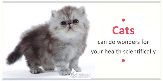 cats can do wonders for your health scientifically