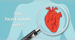 How heart valves works?