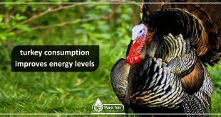 turkey consumption improves energy levels