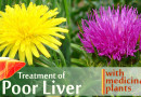 Milk thistle supports our liver