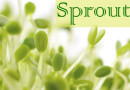 Different sprouts