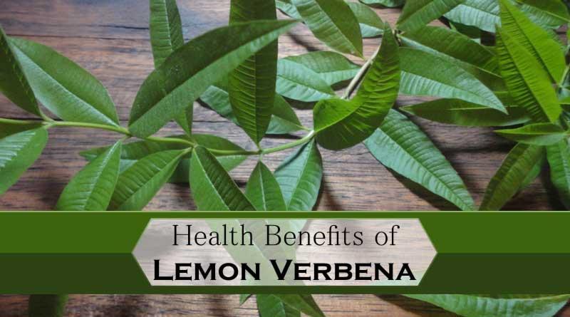 Health Benefits of Lemon Verbena