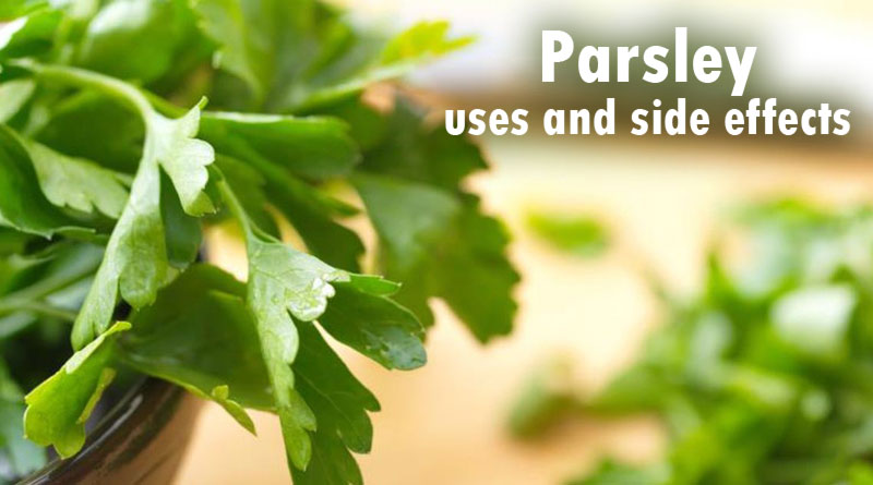 Parsley uses and side effects:
