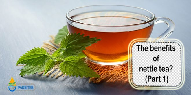 The benefits of nettle tea? (Part 1)