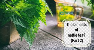 The benefits of nettle tea (Part 2)