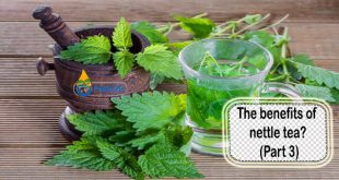 The benefits of nettle tea (Part 3)